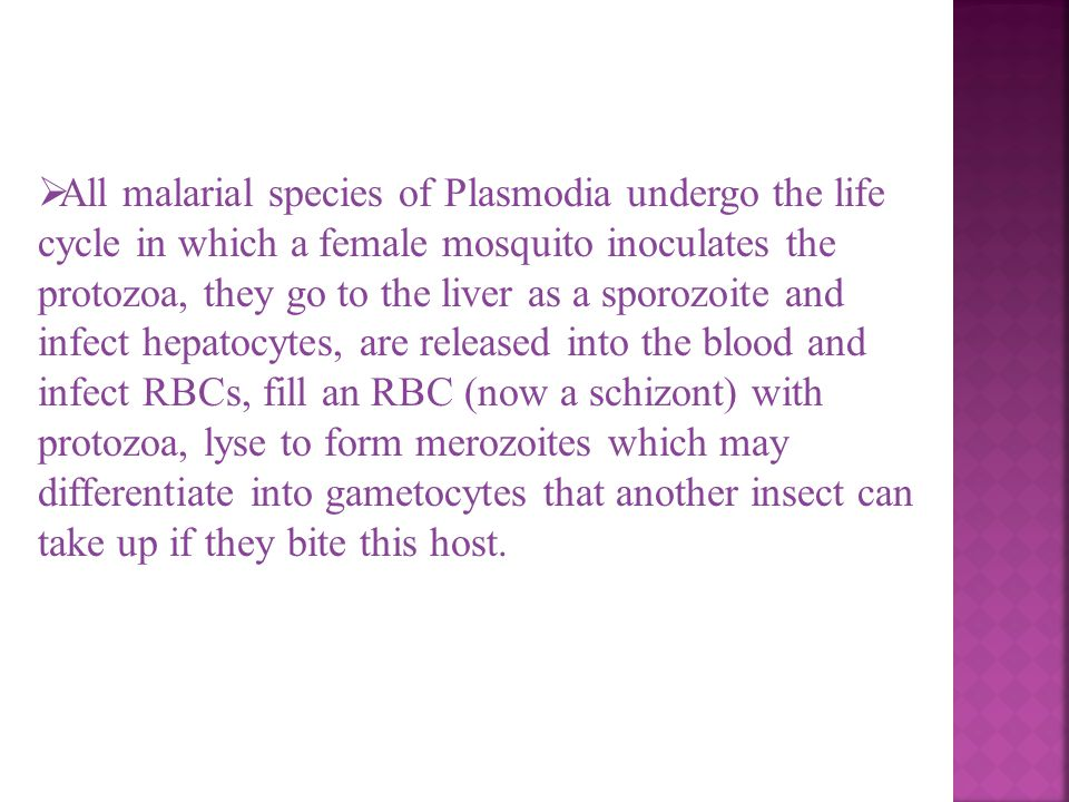 All malarial species of Plasmodia undergo the life cycle in which a female mosquito inoculates the protozoa, they go to the liver as a sporozoite and infect hepatocytes, are released into the blood and infect RBCs, fill an RBC (now a schizont) with protozoa, lyse to form merozoites which may differentiate into gametocytes that another insect can take up if they bite this host.