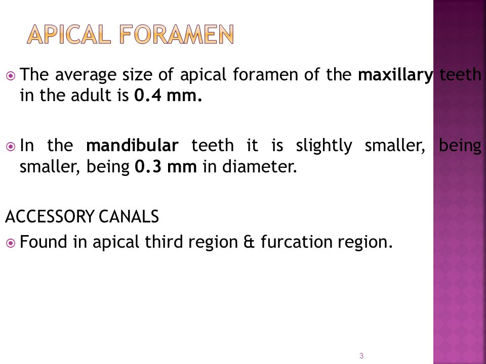 APICAL FORAMEN The average size of apical foramen of the maxillary teeth in the adult is 0.4 mm.