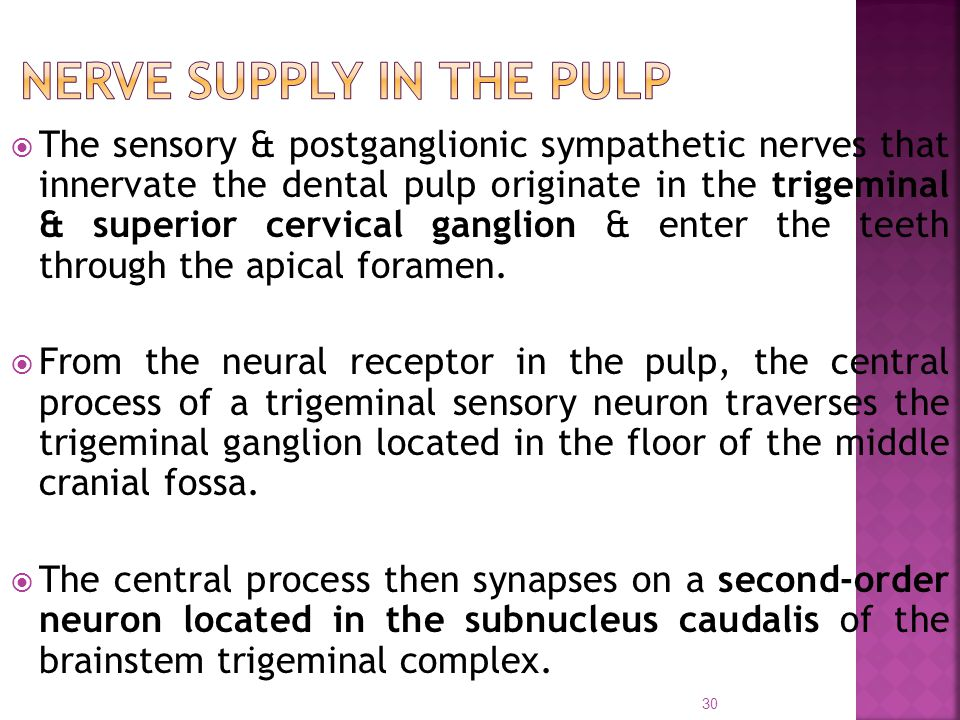 Nerve supply in the pulp
