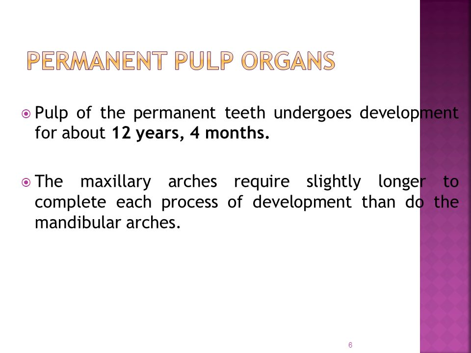 PERMANENT PULP ORGANS Pulp of the permanent teeth undergoes development for about 12 years, 4 months.