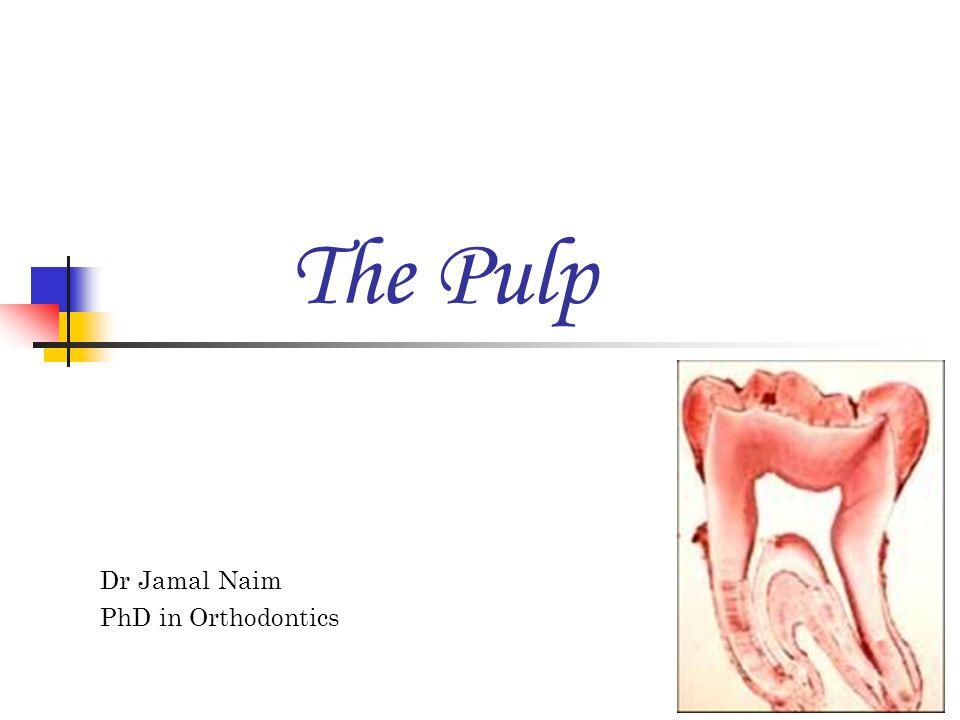 The Pulp Dr Jamal Naim PhD in Orthodontics