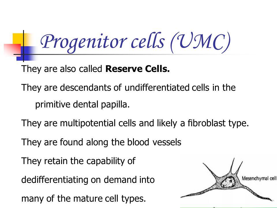 Progenitor cells (UMC)