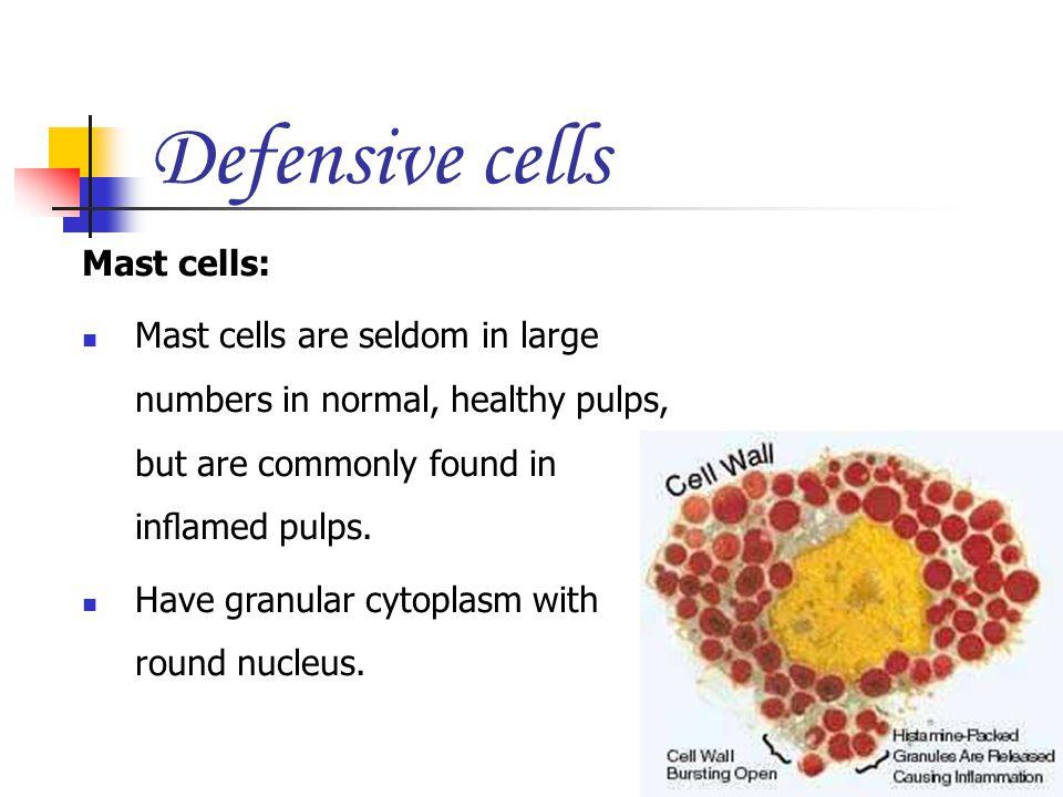 Defensive cells Mast cells: