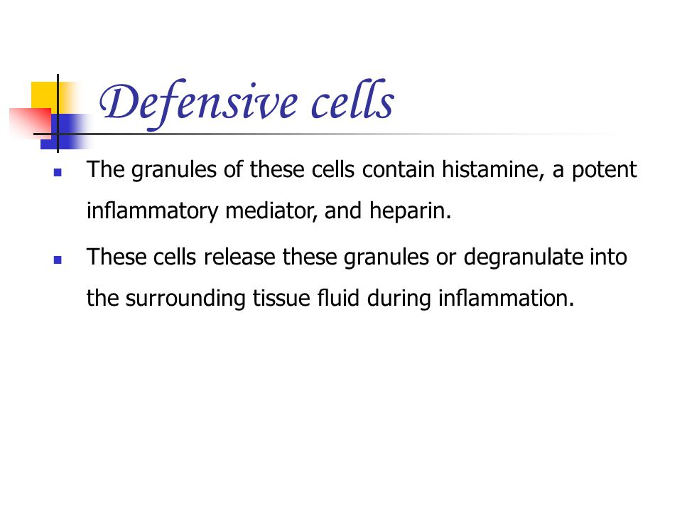Defensive cells The granules of these cells contain histamine, a potent inflammatory mediator, and heparin.
