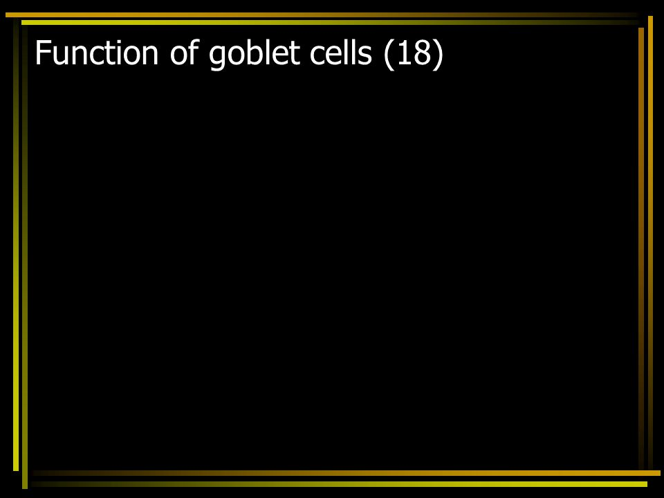 Function of goblet cells (18)