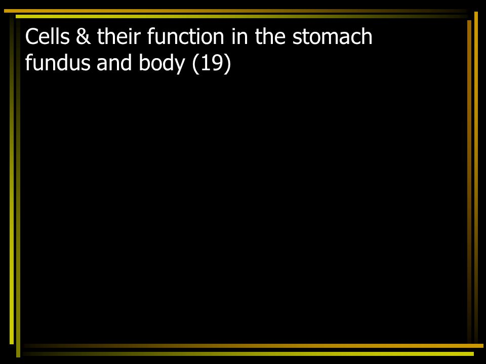 Cells & their function in the stomach fundus and body (19)