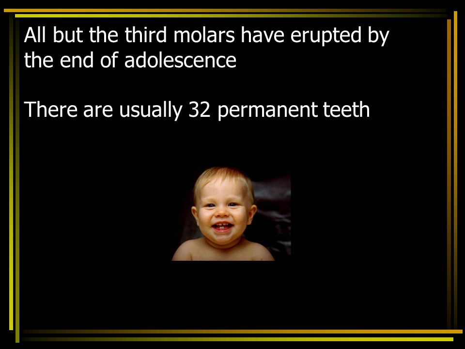All but the third molars have erupted by the end of adolescence There are usually 32 permanent teeth