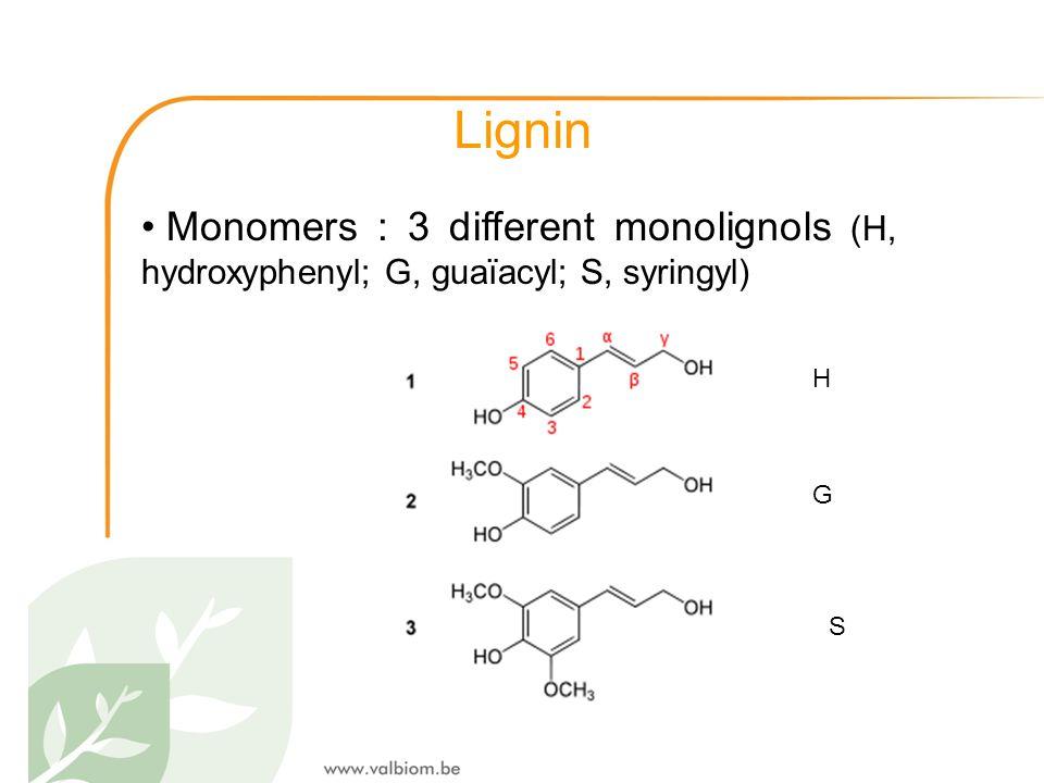 Lignin Monomers : 3 different monolignols (H, hydroxyphenyl; G, guaïacyl; S, syringyl) H G S