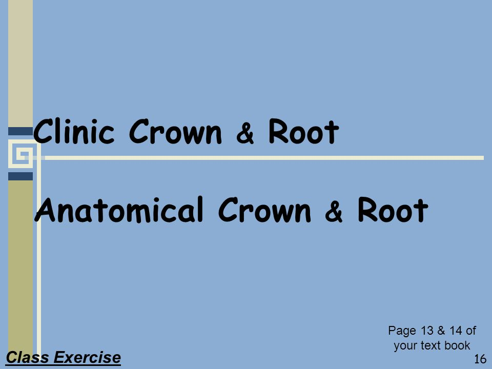 Clinic Crown & Root Anatomical Crown & Root