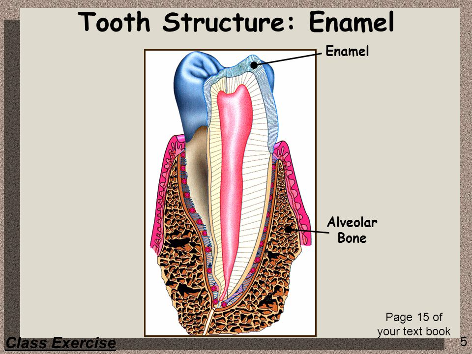 Tooth Structure: Enamel