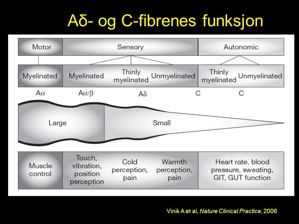 Aδ- og C-fibrenes funksjon