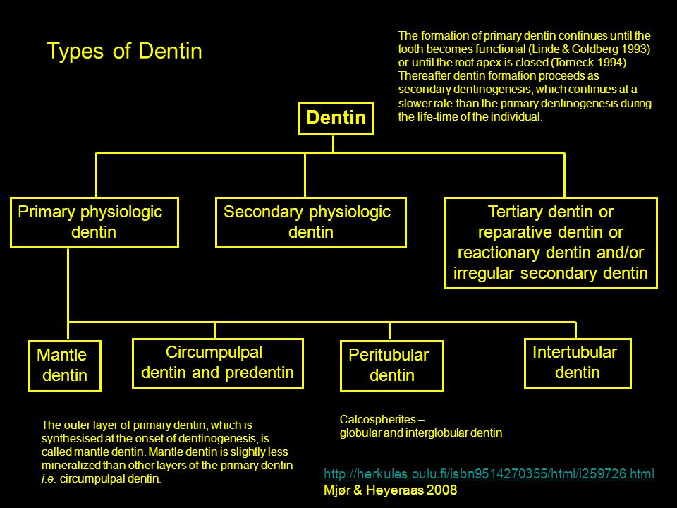 Types of Dentin Dentin Primary physiologic dentin