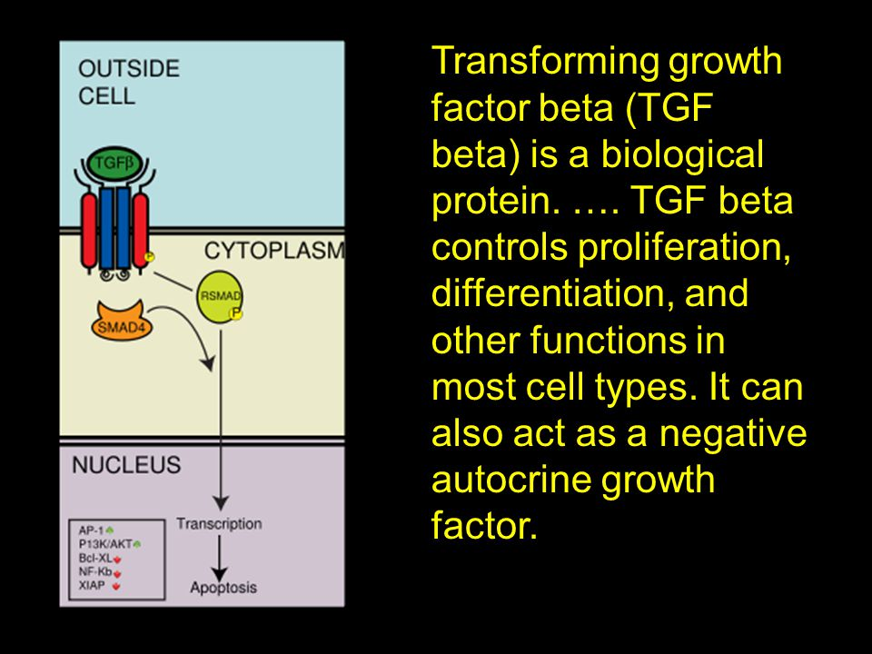 Transforming growth factor beta (TGF beta) is a biological protein. …