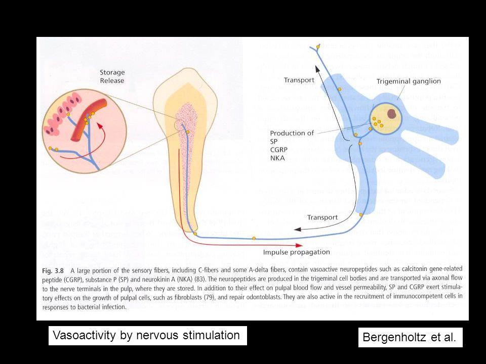 Vasoactivity by nervous stimulation