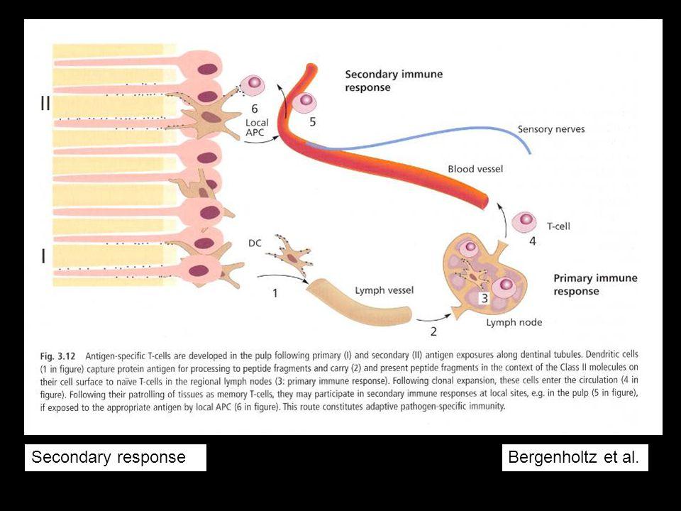 Secondary response Bergenholtz et al.