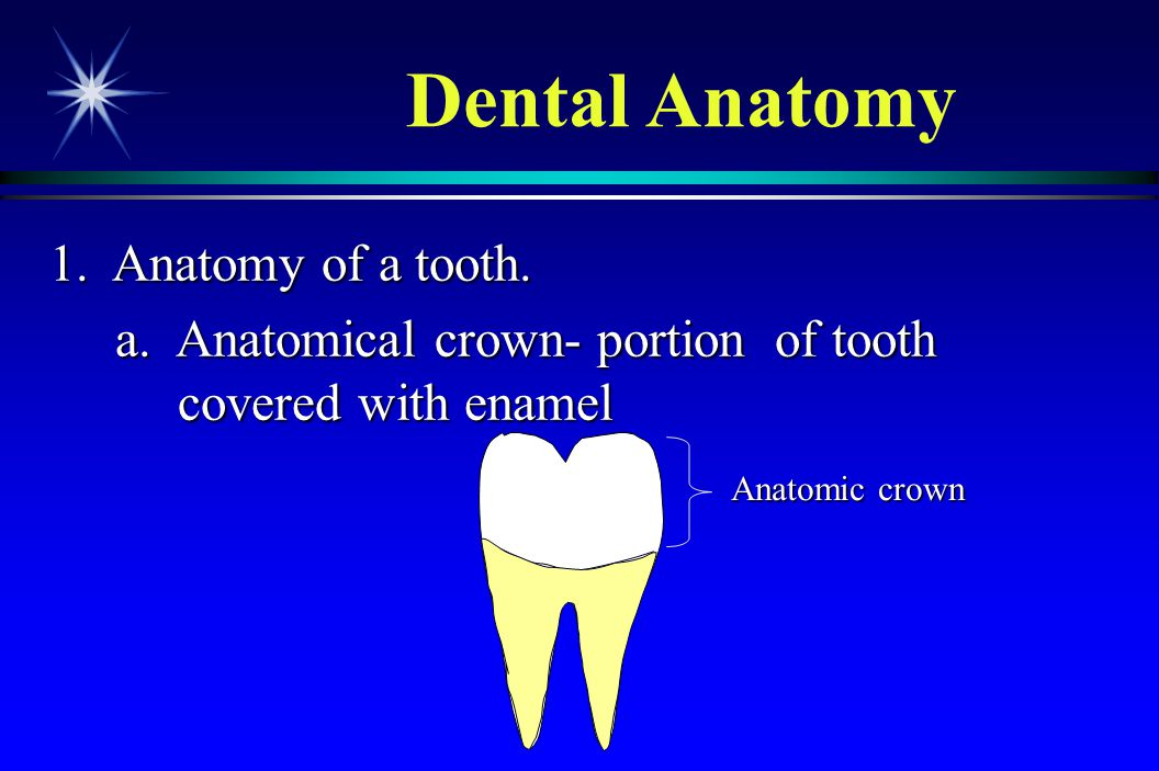 Dental Anatomy 1. Anatomy of a tooth.