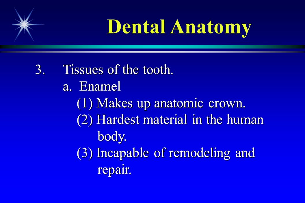 Dental Anatomy 3. Tissues of the tooth. a. Enamel