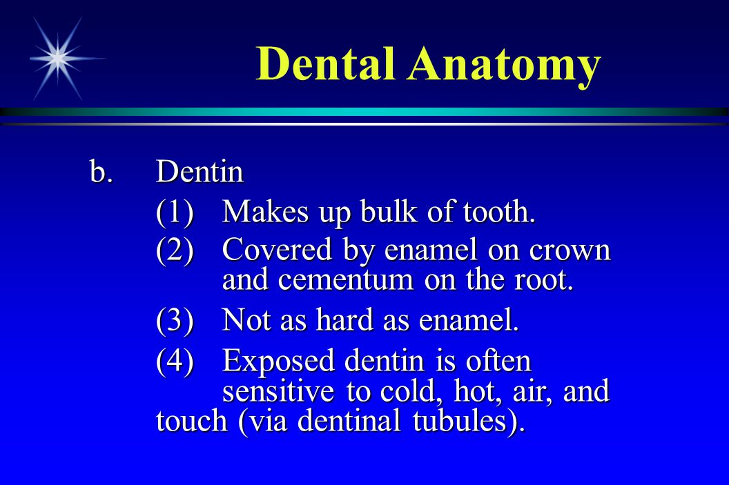 Dental Anatomy b. Dentin (1) Makes up bulk of tooth.