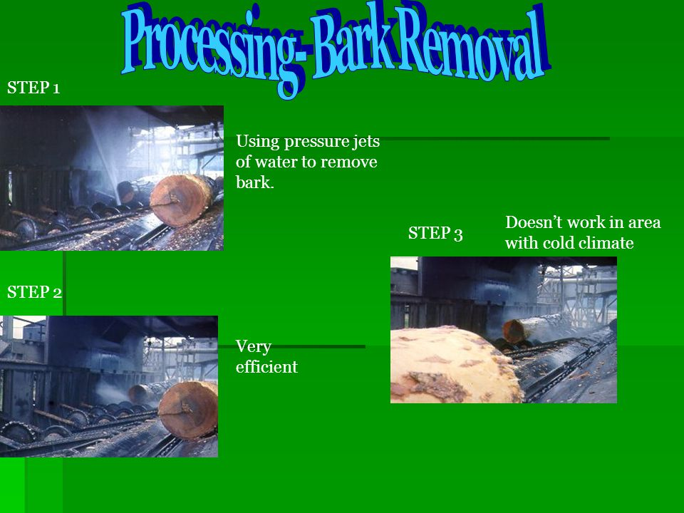 Processing- Bark Removal