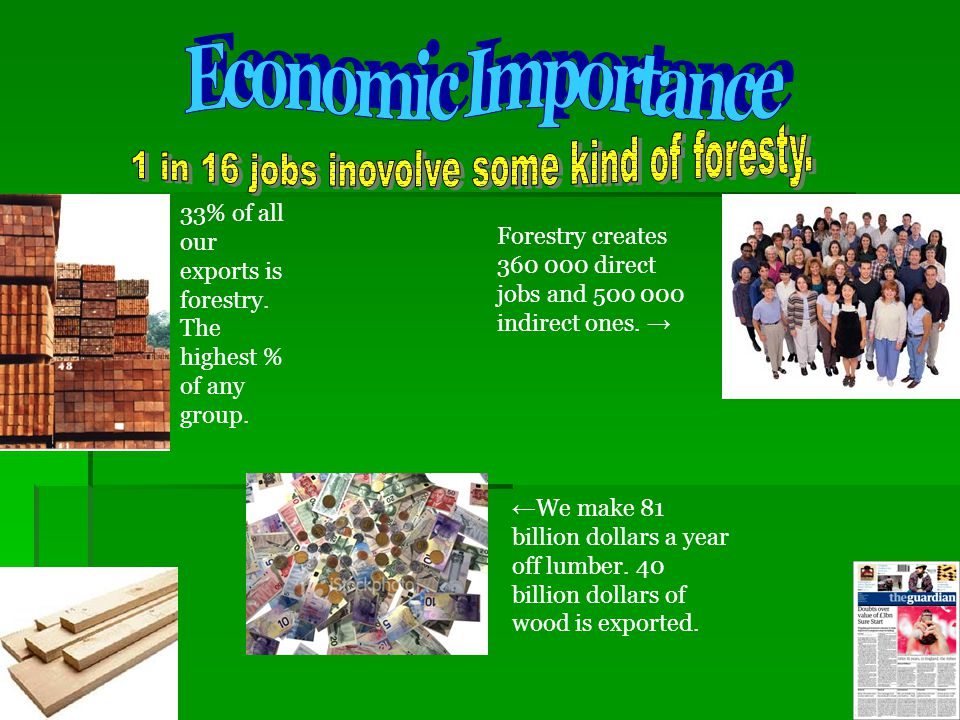 1 in 16 jobs inovolve some kind of foresty.