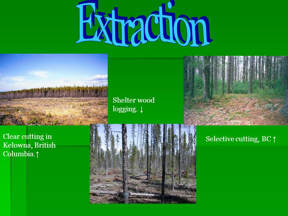 Extraction Shelter wood logging. ↓