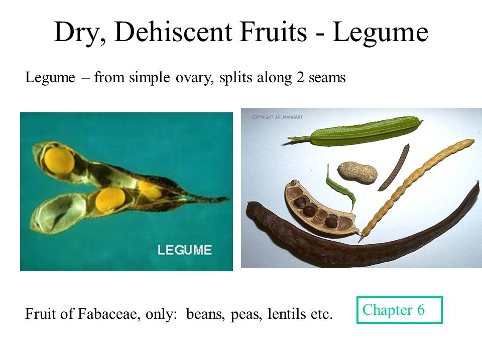 Dry, Dehiscent Fruits - Legume
