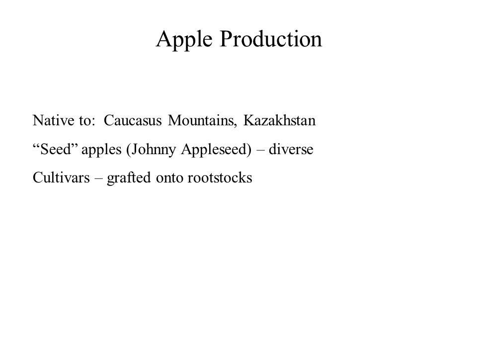 Apple Production Native to: Caucasus Mountains, Kazakhstan