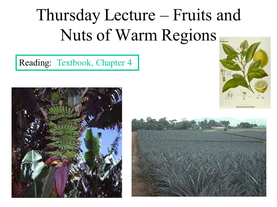 Thursday Lecture – Fruits and Nuts of Warm Regions