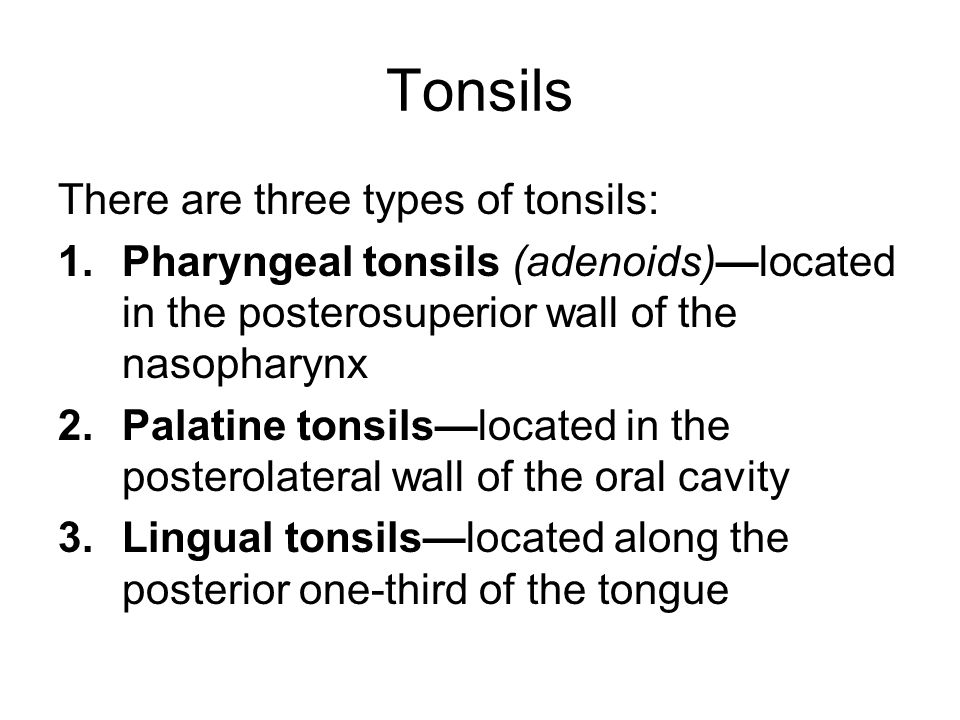 Tonsils There are three types of tonsils: