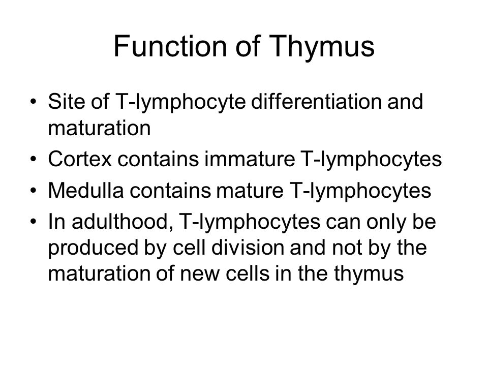 Function of Thymus Site of T-lymphocyte differentiation and maturation