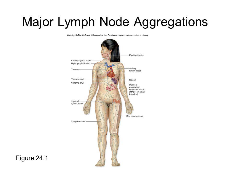 Major Lymph Node Aggregations