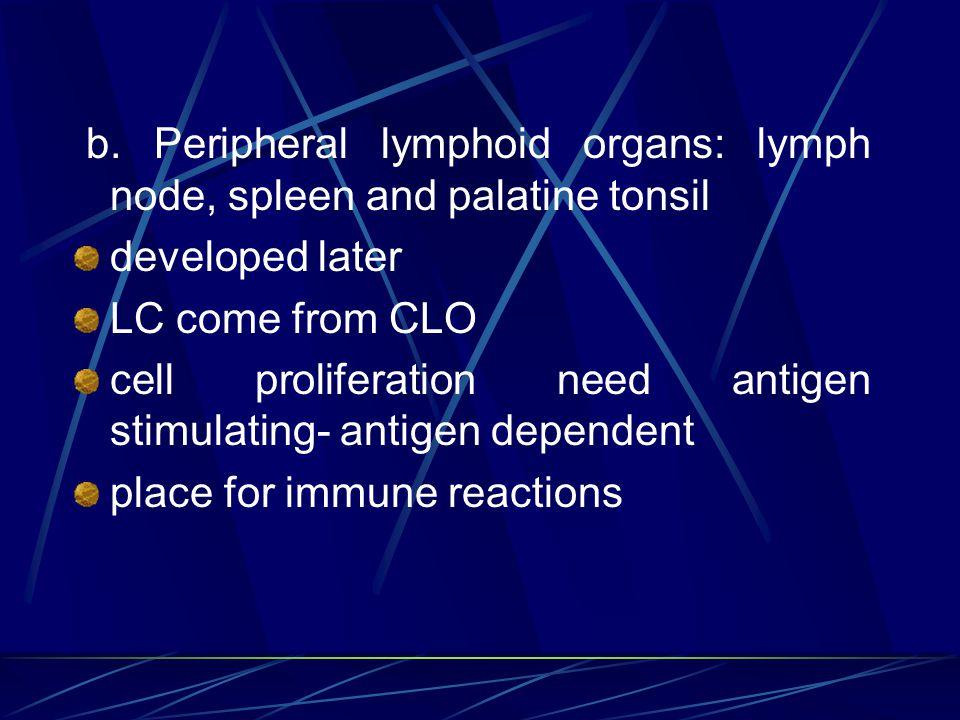 b. Peripheral lymphoid organs: lymph node, spleen and palatine tonsil
