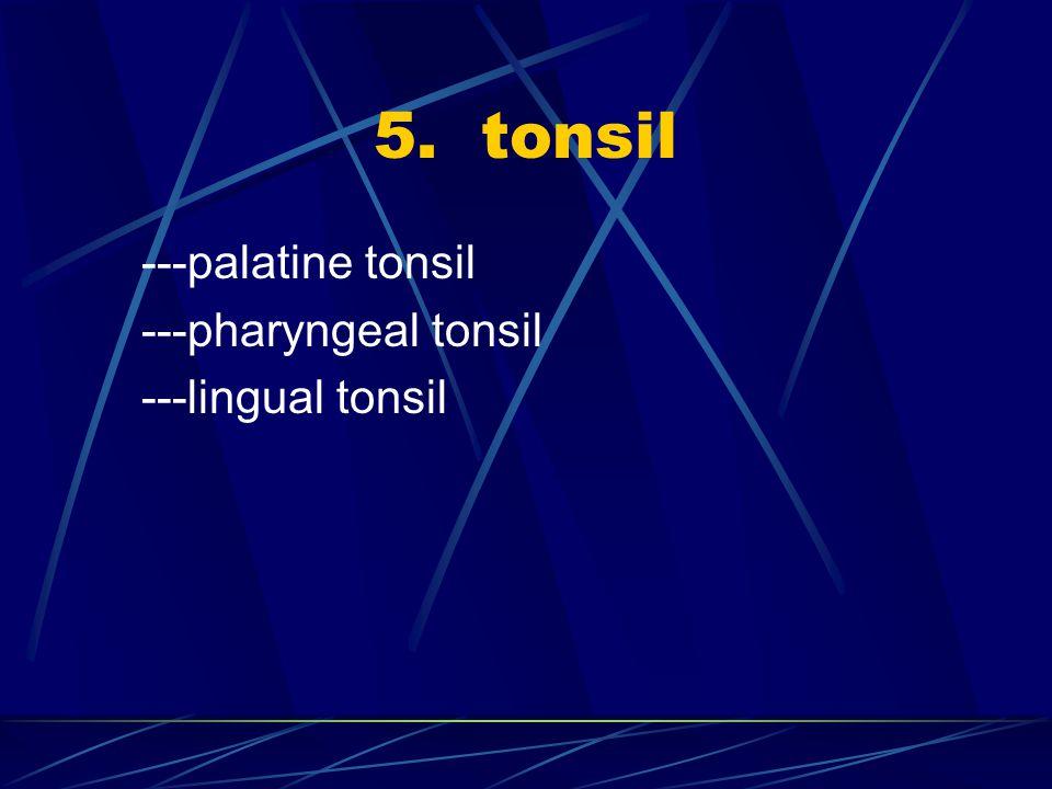 5. tonsil ---palatine tonsil ---pharyngeal tonsil ---lingual tonsil