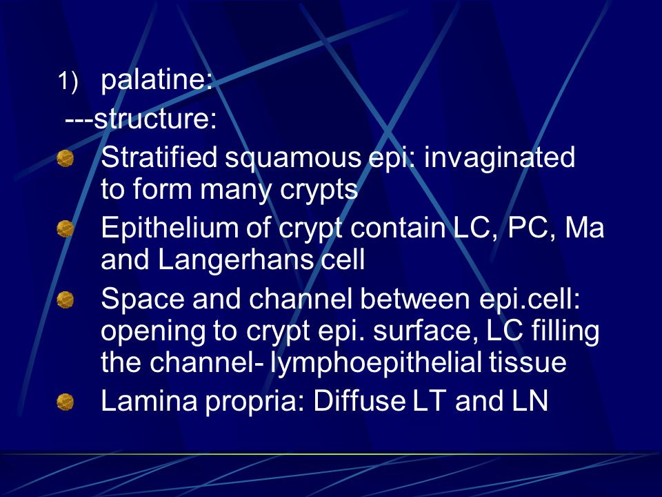 palatine: ---structure: Stratified squamous epi: invaginated to form many crypts. Epithelium of crypt contain LC, PC, Ma and Langerhans cell.