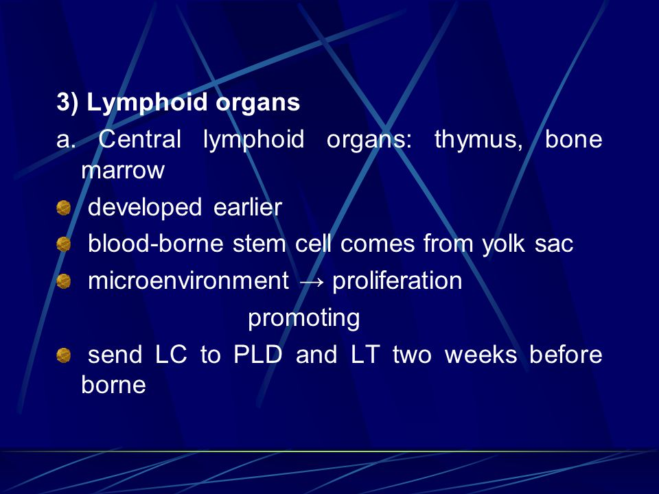 3) Lymphoid organs a. Central lymphoid organs: thymus, bone marrow. developed earlier. blood-borne stem cell comes from yolk sac.