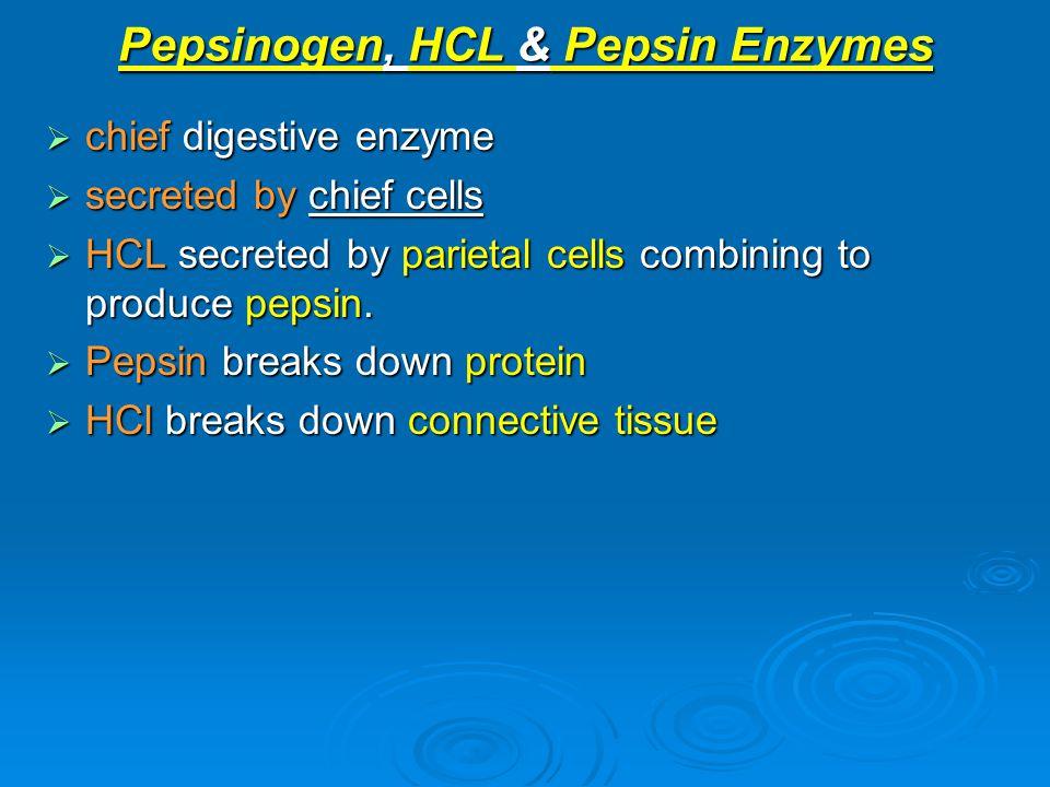 Pepsinogen, HCL & Pepsin Enzymes