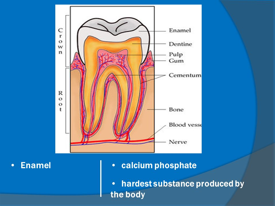 Enamel calcium phosphate hardest substance produced by the body
