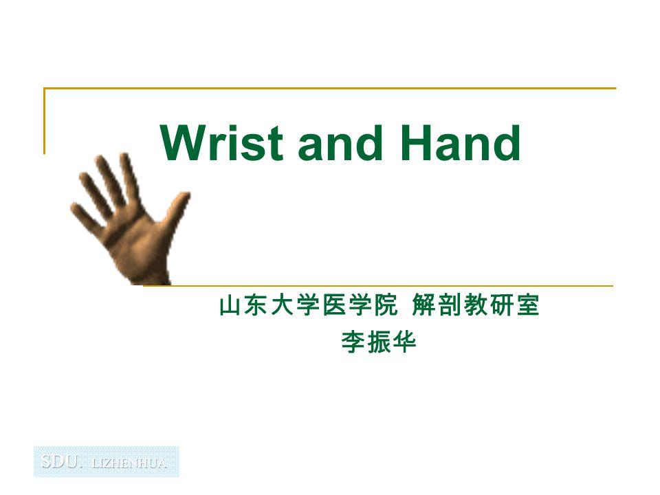 Wrist and Hand 山东大学医学院 解剖教研室 李振华
