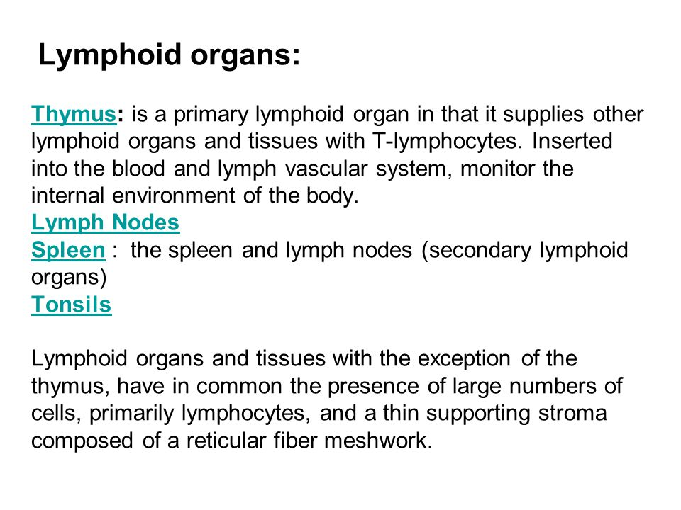 Lymphoid organs: Thymus: is a primary lymphoid organ in that it supplies other lymphoid organs and tissues with T-lymphocytes.