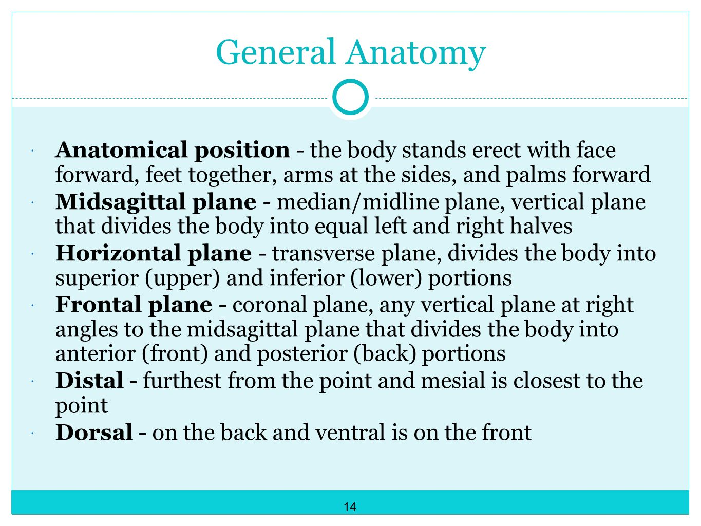 General Anatomy Anatomical position - the body stands erect with face forward, feet together, arms at the sides, and palms forward.