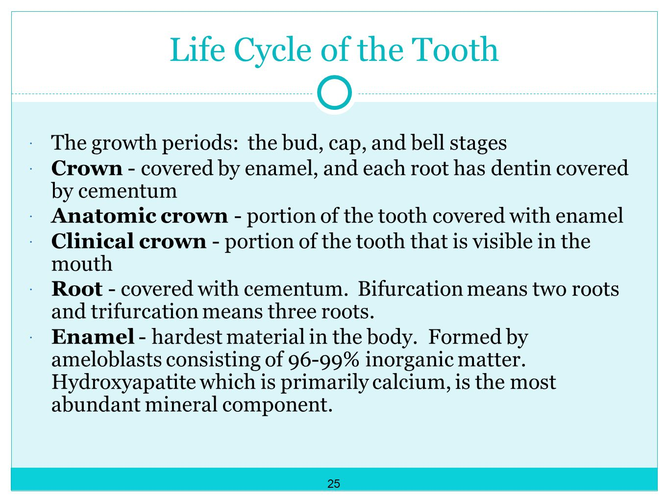Life Cycle of the Tooth The growth periods: the bud, cap, and bell stages. Crown - covered by enamel, and each root has dentin covered by cementum.