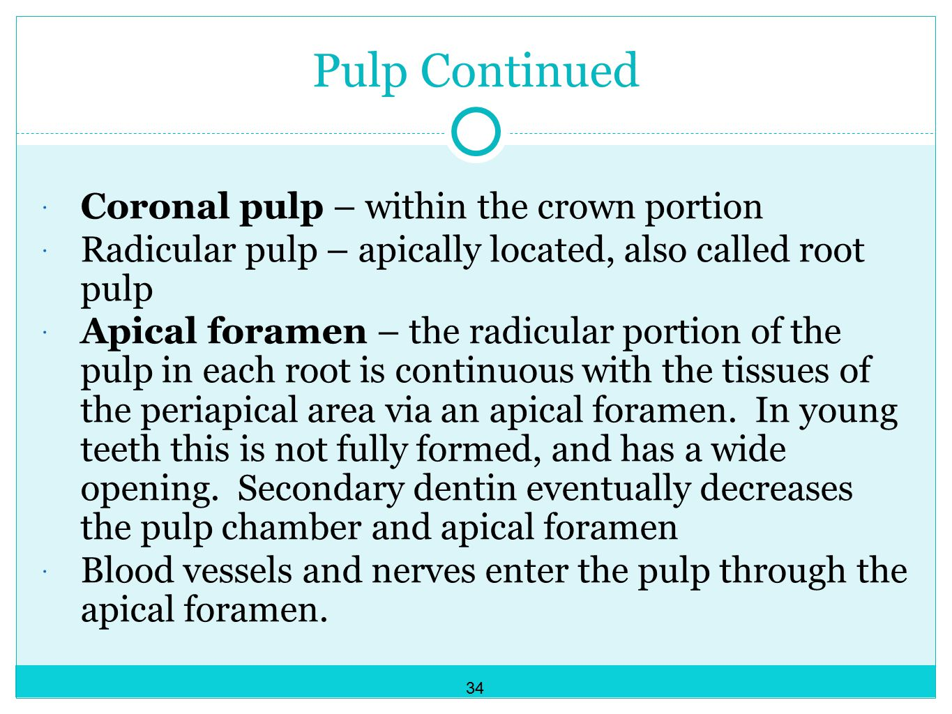Pulp Continued Coronal pulp – within the crown portion