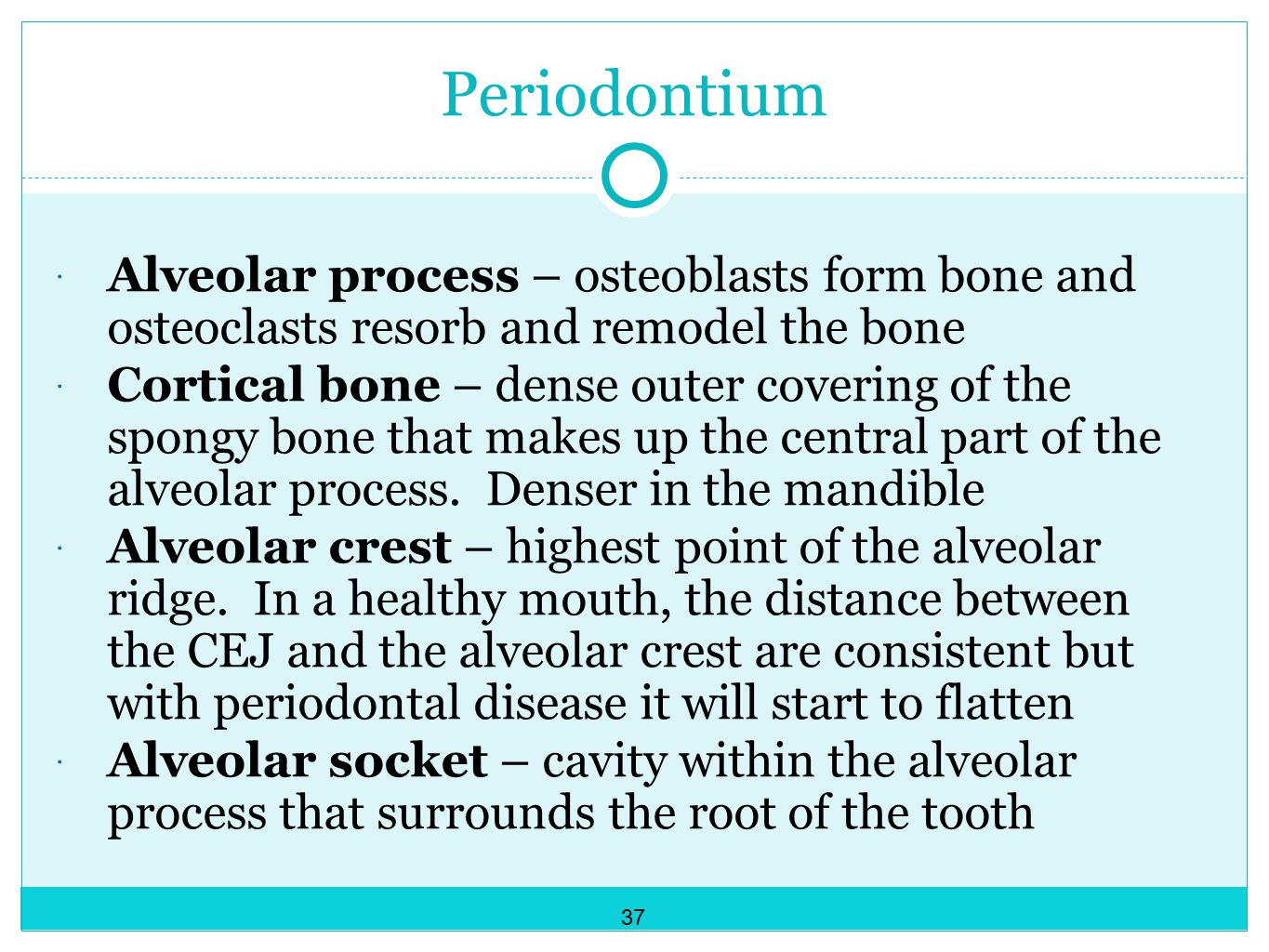Periodontium Alveolar process – osteoblasts form bone and osteoclasts resorb and remodel the bone.