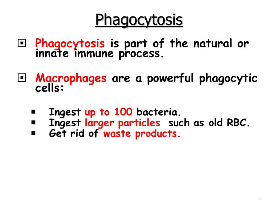 Phagocytosis Phagocytosis is part of the natural or innate immune process. Macrophages are a powerful phagocytic cells: