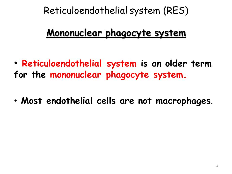 Reticuloendothelial system (RES) Mononuclear phagocyte system