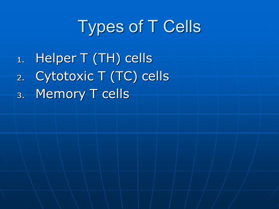Types of T Cells Helper T (TH) cells Cytotoxic T (TC) cells