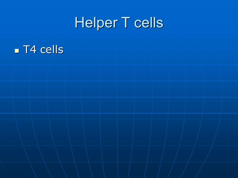 Helper T cells T4 cells