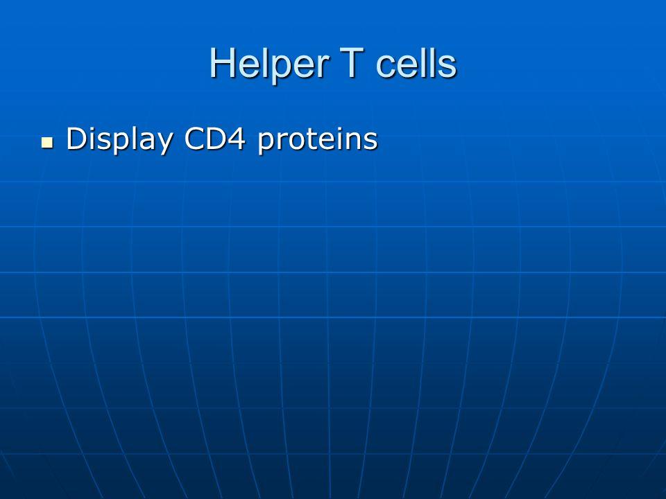 Helper T cells Display CD4 proteins