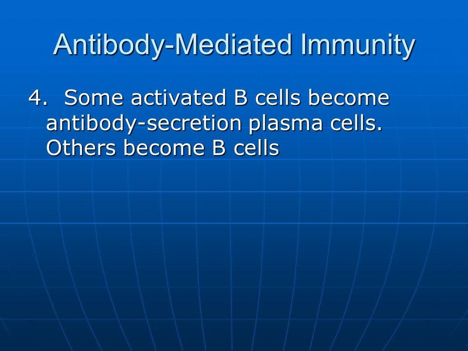 Antibody-Mediated Immunity
