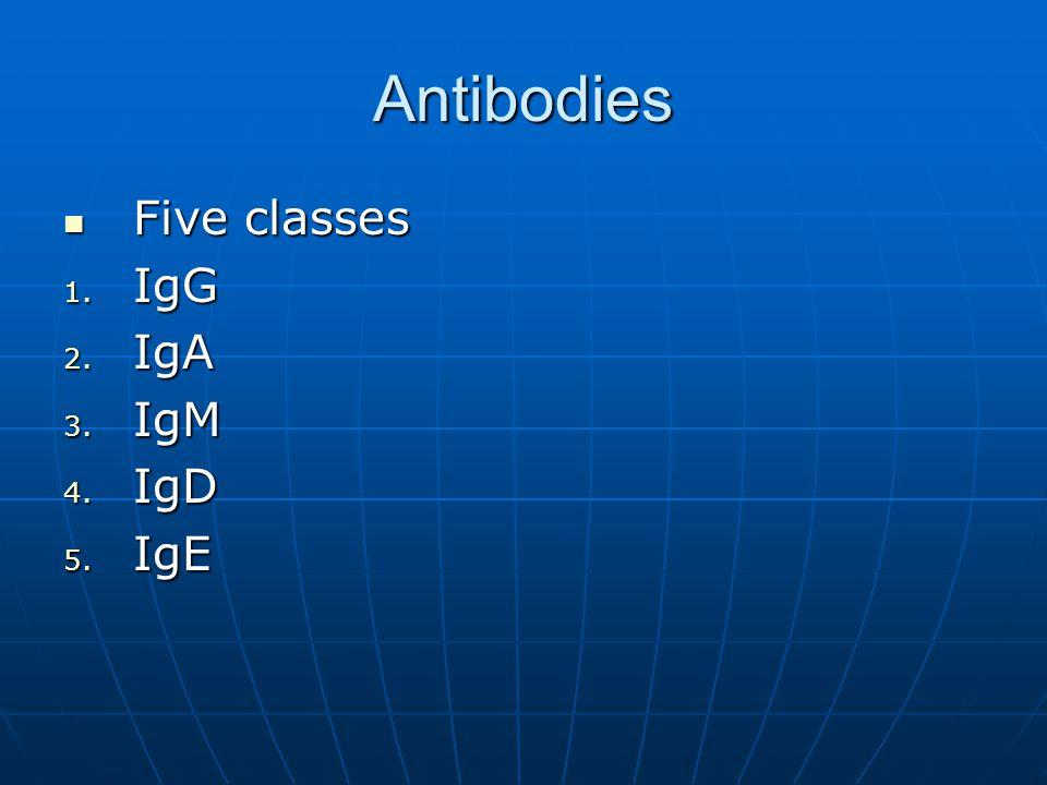 Antibodies Five classes IgG IgA IgM IgD IgE